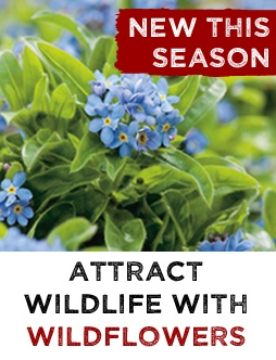 NEW Wildflower Seeds