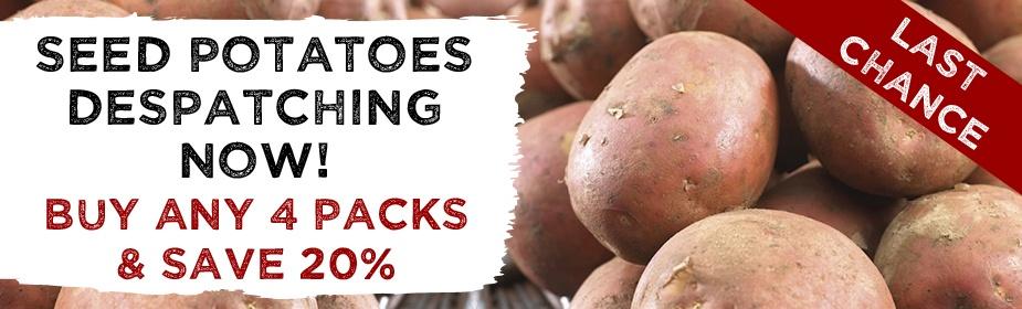 Last Chance Seed Potatoes!
