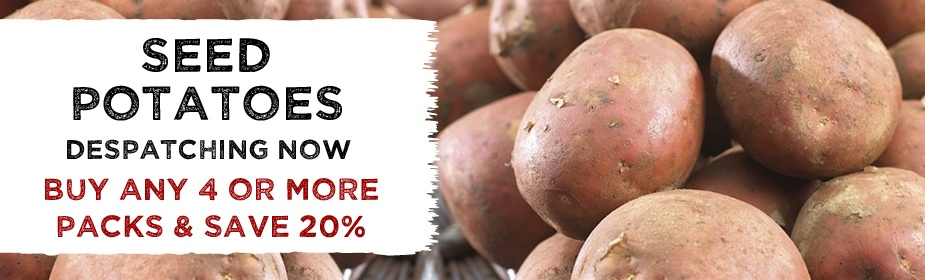 Seed Potatoes Despatching Now - SAVE 20%