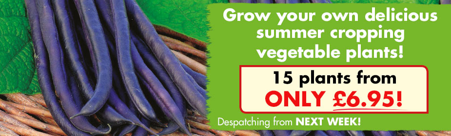 Summer Cropping Vegetable Plants