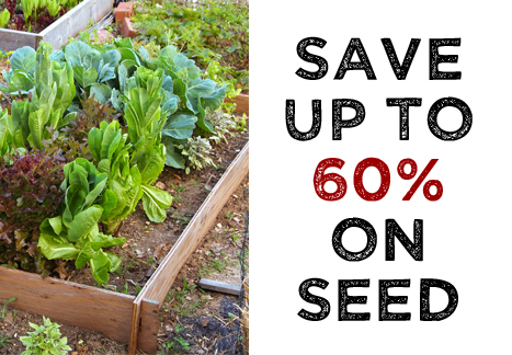 Save up to 60% on seed
