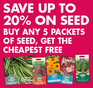20% on Seed