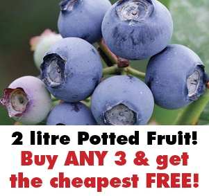 3 for 2 on Potted Soft Fruit Plants