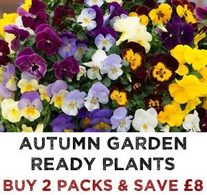 Autumn Garden Ready Plants - Buy 2 Packs & SAVE £8