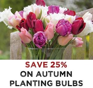 Autumn Planting Bulbs - SAVE 25%