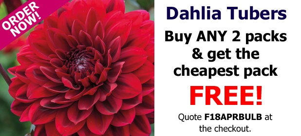 Dahlia Tubers - Buy ANY 2 pack and get the Cheapest FREE!