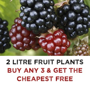 3 for 2 on ALL 2 Litre Potted Soft Fruit