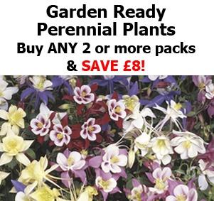 Garden Ready Perennial Plants