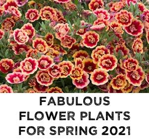 NEW Flower Plants for 2021