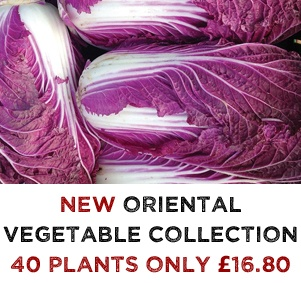 NEW Oriental Vegetable Plants