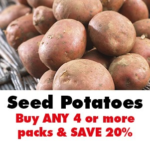 SAVE 20% on Seed Potatoes