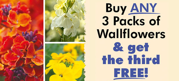 Buy Any 3 Packs of Wallflowers & get the 3rd FREE!