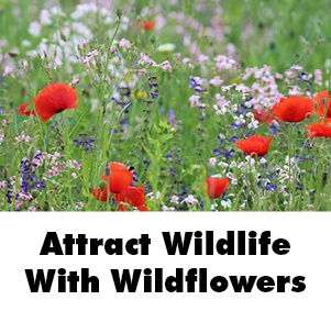 Attract Wildlife With Wildflowers