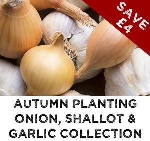 Autumn Planting Onions, Shallots & Garlic Collection
