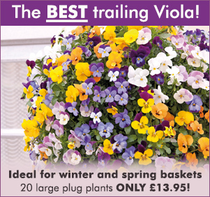 The best trailing viola!