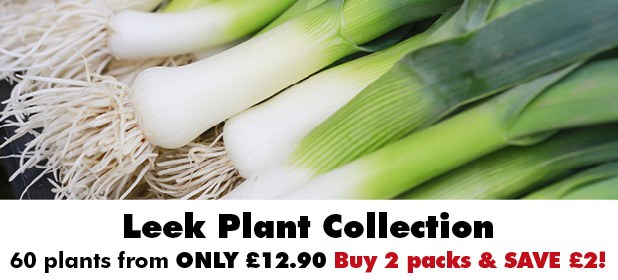 Leek Plant Collection