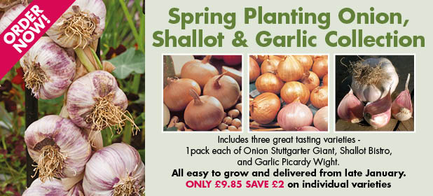Spring Planting Onions, Shallots & Garlic