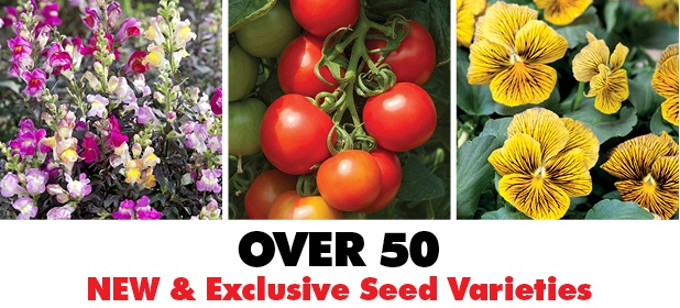 New and Exclusive Seed Varieties