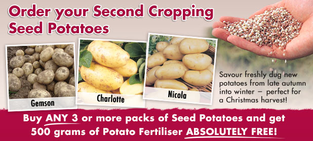 Second Cropping Seed Potatoes