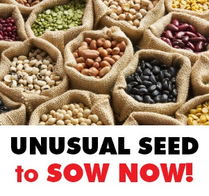 Unusual Seed Varieties