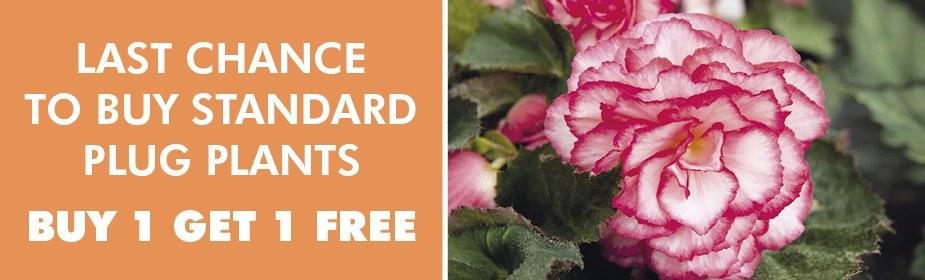 Buy One Get One Free Plug Plants