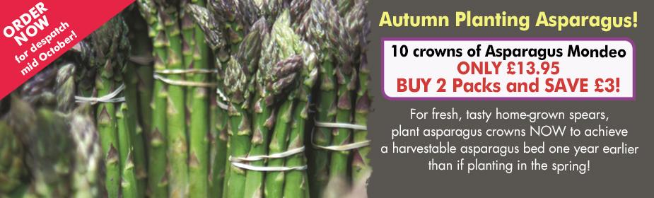 Autumn planting Asparagus