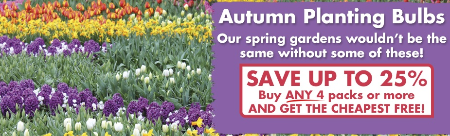 Autumn Planting Bulbs - SAVE up to 25% - Buy ANY 4 packs or more and get the CHEAPEST PACK FREE!