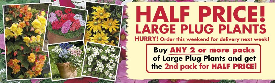 Half Price Large Plug Plants