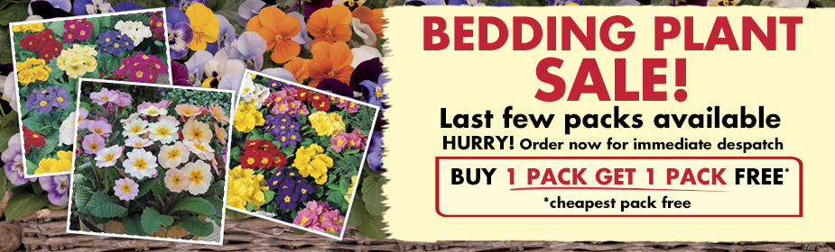 Buy ANY 2 or more packs of Bedding Plants and get the 2nd pack ABSOLUTELY FREE!