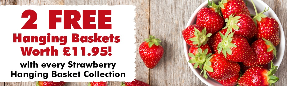 FREE Hanging Baskets with Every Strawberry Hanging Basket Collection