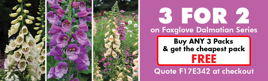 3 For 2 Fox Glove Special Offer