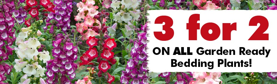 3 for 2 on All Garden Ready Plants