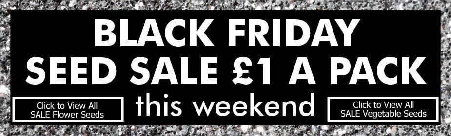Black Friday seed sale