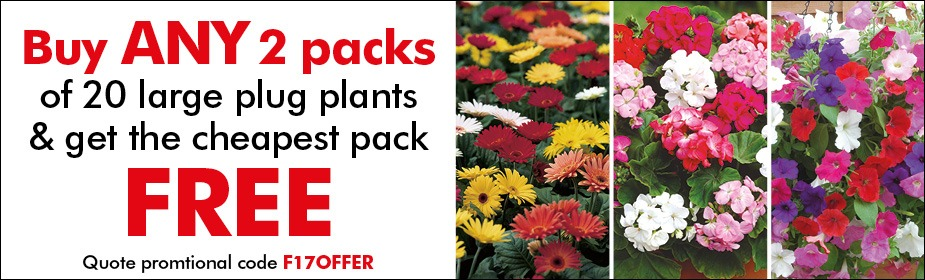 Buy 2 packs of ANY 20 large plug plants and get the cheapest pack FREE
