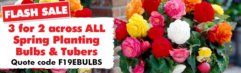 3 for 2 on All Spring Planting Bulbs