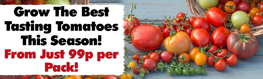Grow The Best Tasting Tomatoes From Just 99p