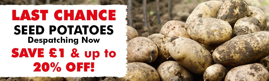Seed Potato SALE