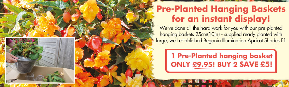 Pre-Planted Hanging Baskets ONLY £9.95! Buy 2 SAVE £5!