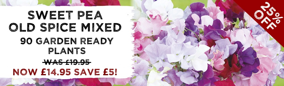 25% OFF Sweet Pea Old Spice Mixed