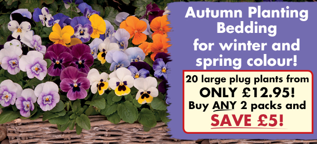 Autumn Planting Bedding - BUY ANY 2 packs and SAVE £5!