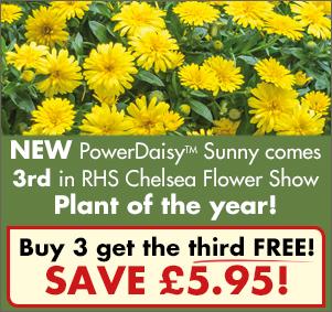 PowerDaisy Sunny