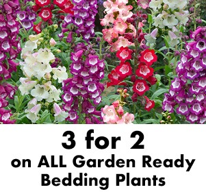 3 for 2 on ALL Garden Ready Bedding Plants