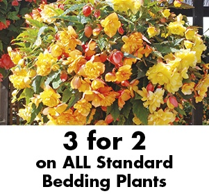 3 for 2 on ALL Standard Bedding Plants