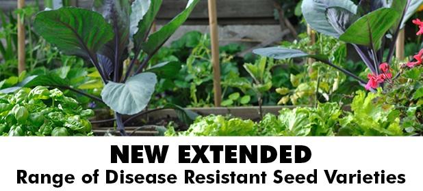 Disease Resistant Seed