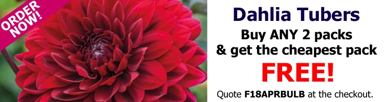 Buy ANY 2 packs of Dahlia Tubers and get the cheapest pack FREE!