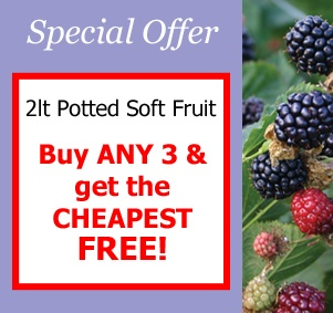 Buy ANY 3 2lt potted soft fruit and get the cheapest FREE!