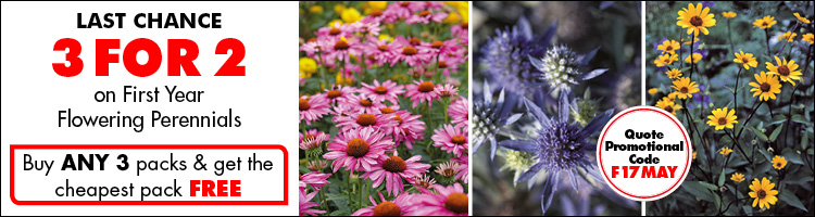 3 for 2 flowering perennials