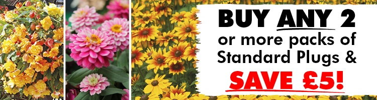 Standard Bedding Flower Plants