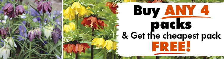 Fritillaria Bulbs
