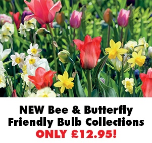 Bee and Butterfly Friendly Bulb Collections